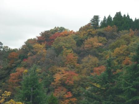 黒川温泉 旅館わかば の わかだんな日記-岩山の上の紅葉